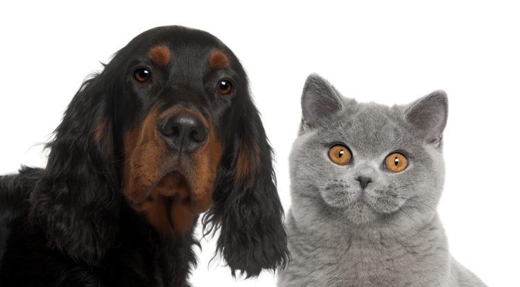 Hund oder Katze als Haustier für Senioren